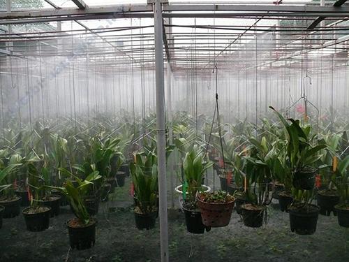 Người dùng giảm được chi phí thuê nhân công khi sử dụng hệ thống phun sương