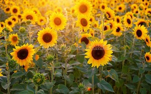 mùa đông thường có hoa gì