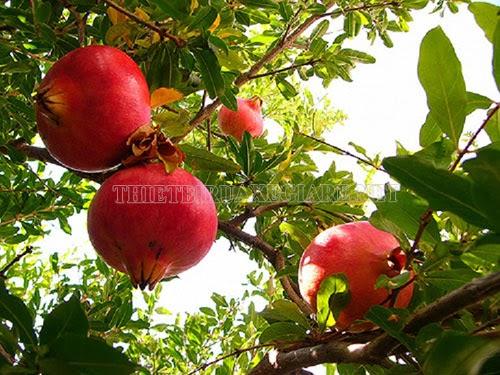 mùa đông có loại quả gì